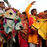 Un toro y una vaca se casan en la India para que vuelva a llover