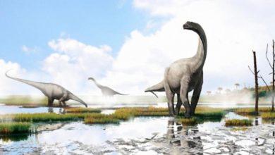 Un dinosaurio llevará el nombre de Andrés Iniesta