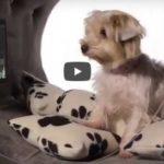 La casa de los sueños de tu perro sólo cuesta 31.000 dólares