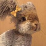 Conoce a Wally, el conejo más adorable de las redes sociales